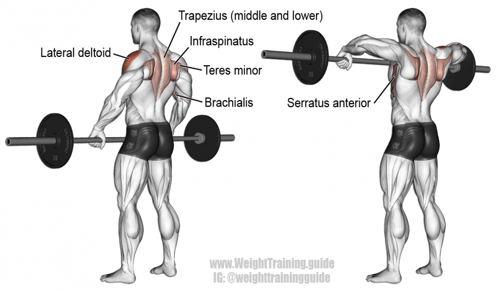 Barbell Upright Row - Tập cầu vai