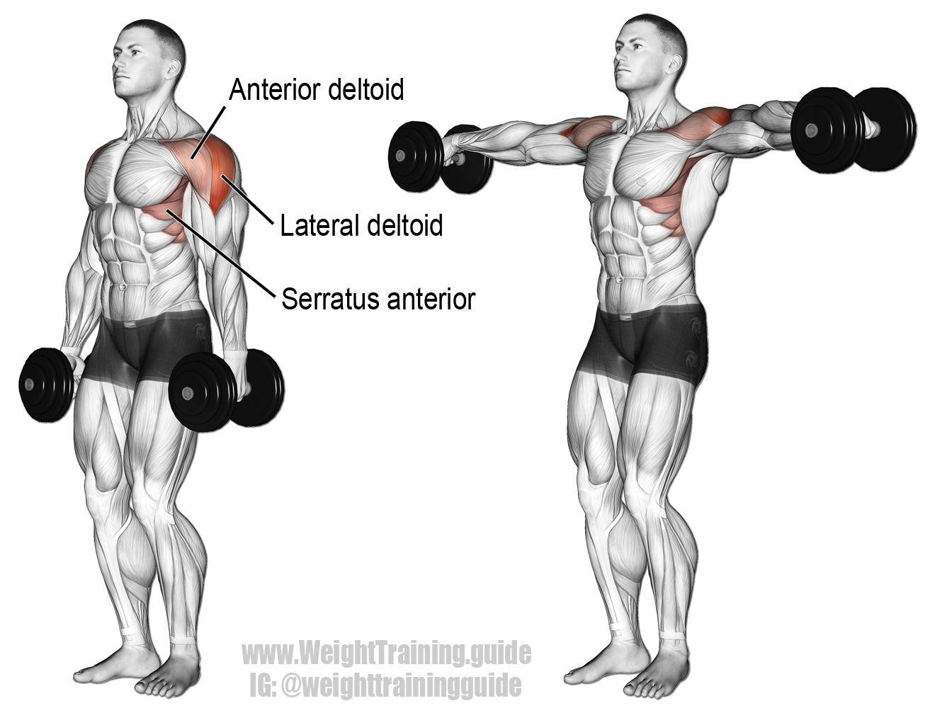 Bài tập cho vai vạm vỡ dumbbell lateral raise